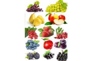 Натуральные фруктово-ягодные концентрированные соки