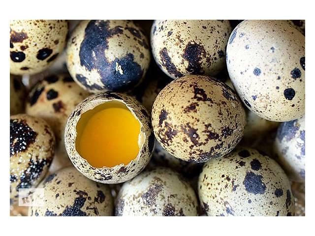 продам Продам яйца перепелов бу в Житомирі