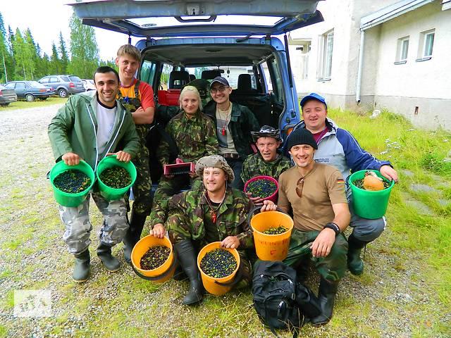 Работа за границей. Сбор урожая в Финляндии- объявление о продаже   в Украине