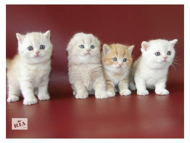 продам Рыжие, белые, мраморные - огромный выбор котят из питомника бу в Киеве