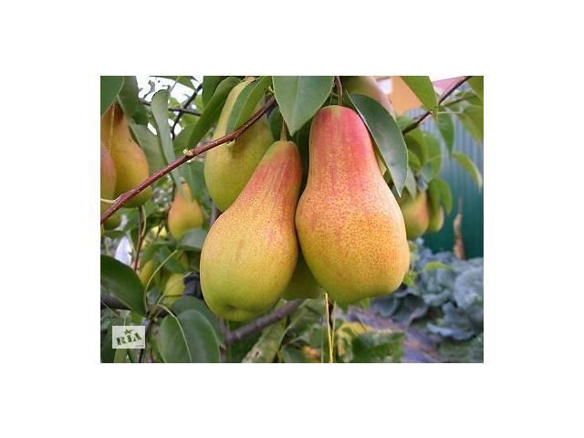 Саженцы плодово-ягодных культур более 1000 сортов. Яблоня, руша,слива,черешня