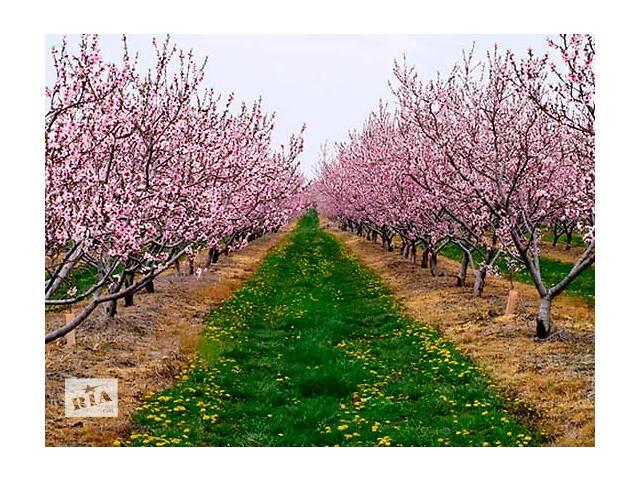 купить бу Саженцы плодовых деревьев в Запорожье