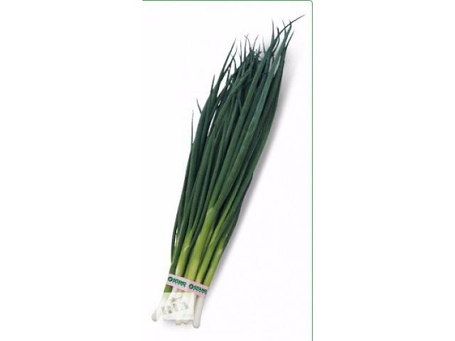 Семена лука на перо Вулкан 20 грамм (Kitano Seeds)- объявление о продаже  в Киеве