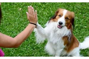 Передержка (домашняя гостиница) для собак