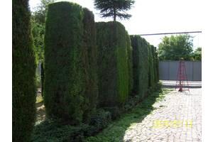 Професійна обрізка дерев та кущів ВСІХ ВИДІВ (садових  та декоративних).