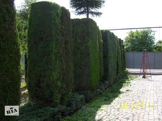 купить бу Професійна обрізка дерев та кущів ВСІХ ВИДІВ (садових  та декоративних). в Закарпатской области