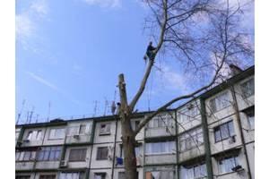 Спилим деревья не наломав дров.Большой опыт.Гарантия аккуратности.