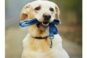 Вигул собак