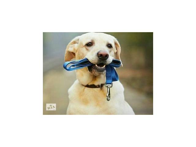 Вигул собак- объявление о продаже   в Украине