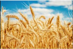 Закупаем зерновые н