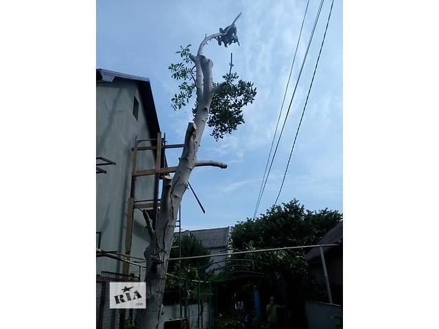 продам Спил деревьев ,обрезка сада в Одессе бу в Одесской области