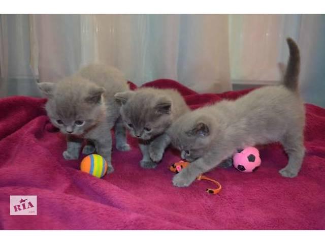 продам Трое замечательных плюшевых котят бу в Тернополе