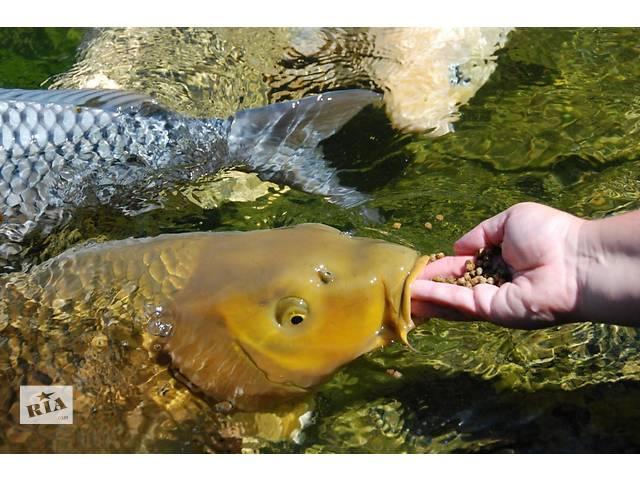 продам koi breeders,цветные карпы цена,карпы кои оптом,аквариумные рыбки,аквариум,пруд,питомник,ферма кои,карпы кои,немфии,корм бу в Киеве