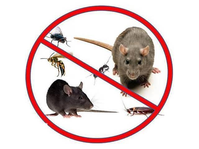 Уничтожение грызунов, насекомых(клопы тараканы блохи др.) ,дезинфекция- объявление о продаже  в Донецкой области