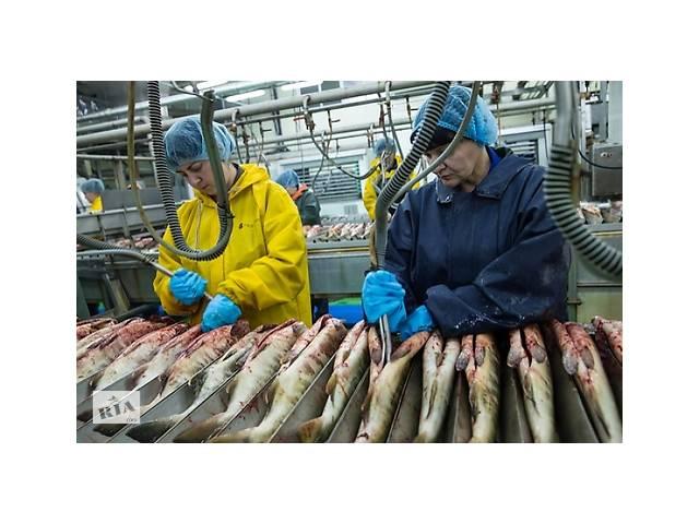 Хельсинки, рабочие на рыбные цеха