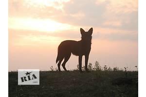 Ветеринарна допомога