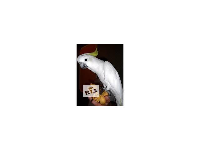 бу Все для попугаев. Продажа - Попугаи, Клетки, Вольеры, Корма для попугаев.  в Украине