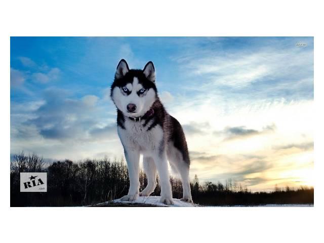 продам Выгуливаю собак бу в Днепре (Днепропетровск)