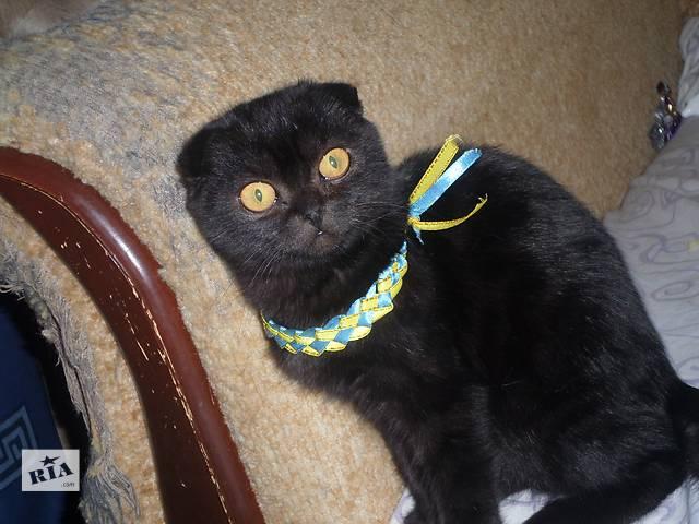 купить бу Вислоухие котики -бегемотики в Киеве