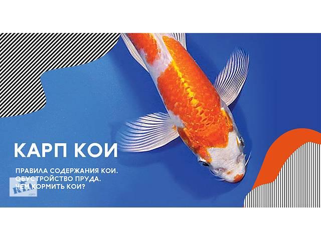 продам японский карп кои цена,карпы кои киев,карпы кои опт,нимфеи,водные растения бу в Киеве