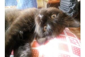 Черный котик ищет новый дом)