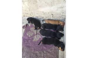 Хочу приютить 4 щенка(сучки).не могу финансов  содержать всех, отдать кому попало совесть   Не позволит.