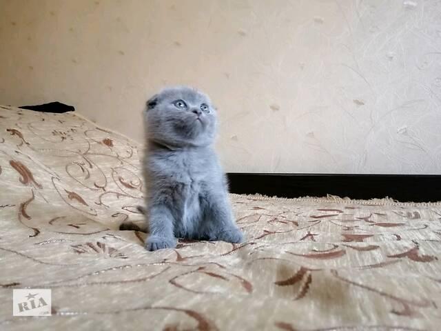 продам Кошки, коты, котята бу в Киеве