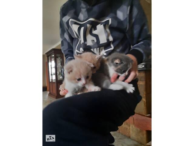бу Кошенята  в Сарнах