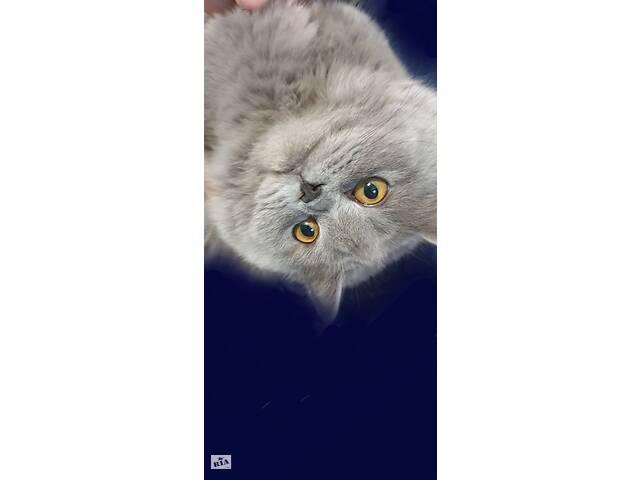 бу Кошка в хорошие руки в Хмельницком