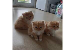 Коттята 2 дівчинки 1 хлопчик