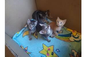 Кошенята добру і дбайливу сім'ю