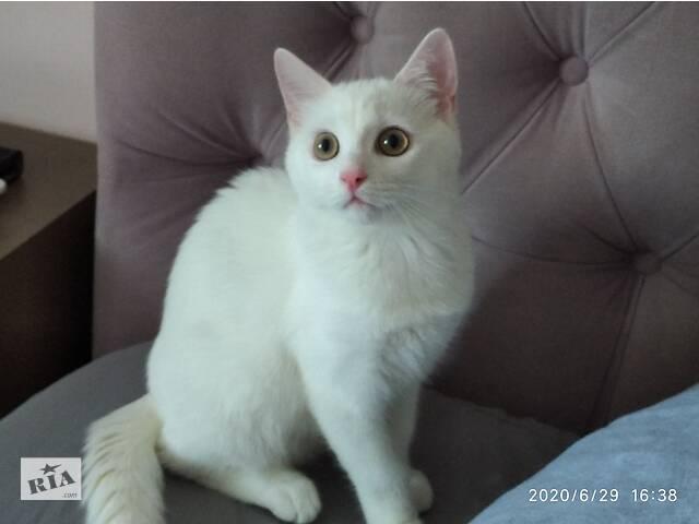 купить бу котик от као мани в Киеве