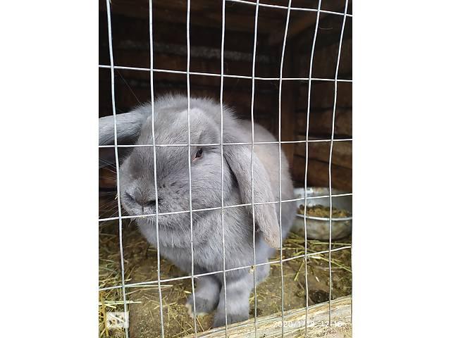 продам Кролики бу в Добротворе