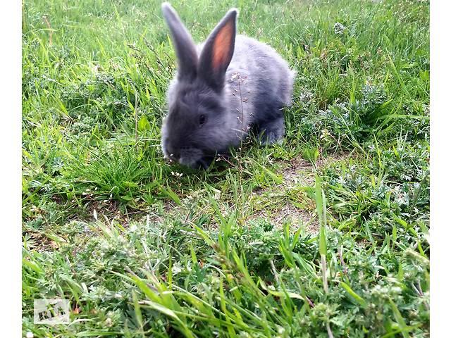 купить бу Кролики в Малине