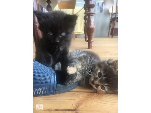 продам Отдадим в добрые руки троих чудесных котят бу в Киеве
