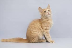 Отдам в хорошие руки котенка мальчика Томми.