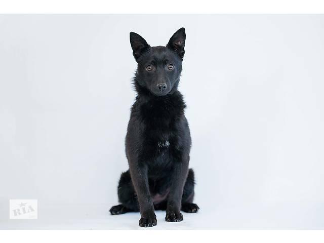 продам Отдам в хорошие руки маленькую собачку ,подростка , девочку Рути. бу в Киеве