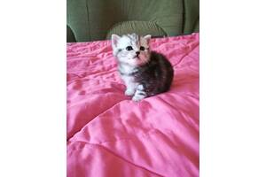 Подарунок кошеня на Миколая!