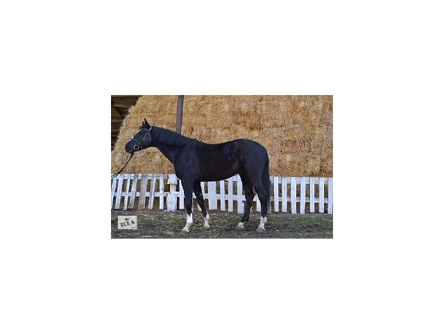 бу Продается конь  в Славянске