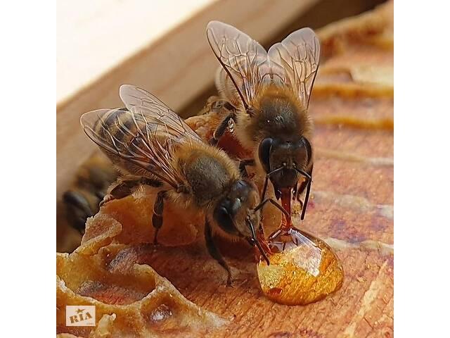 продам Продам бджлопакет бу в Хмельницком