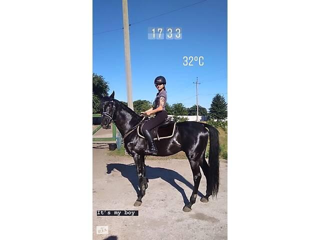 купить бу Продам лошадь, конь, жеребец, мерин, кобыла. в Каменском (Днепродзержинск)