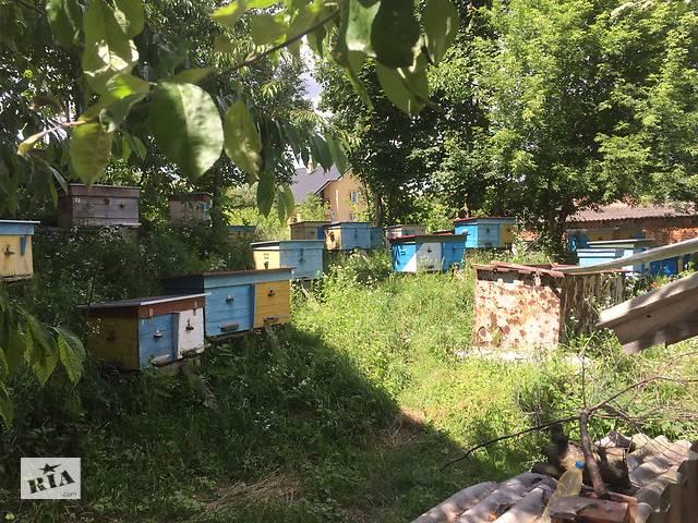 Продам пасіку (15 вуликів)- объявление о продаже  в Тернополі