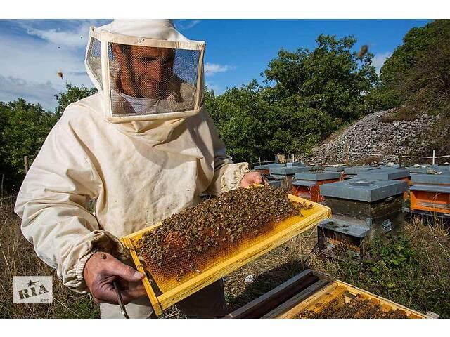 Продам пчёлы- объявление о продаже  в Виннице