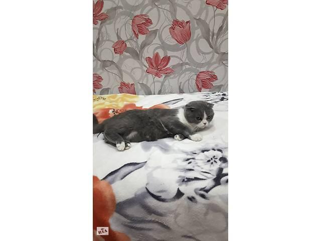 продам Продам шотландских котят бу в Новогродовке