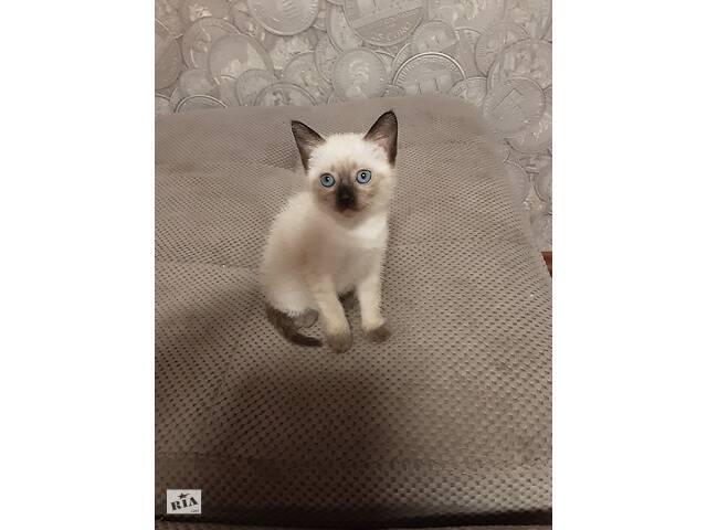 продам Продам тайского котёнка 1.5 месяца. Голубоглазая, игривая!!!!!! бу в Одессе