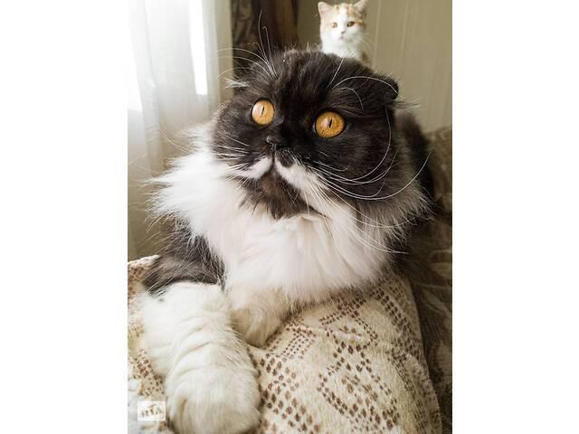 бу Шотландська кішечка в добрі руки в Хмельницком