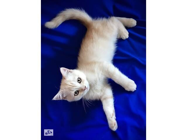 бу Ценителям породистых котят с документами в Киеве