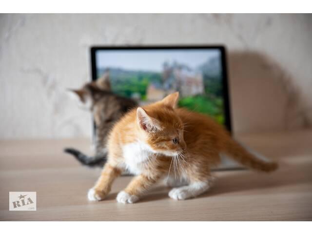 продам Весёлые котята! бу в Харькове