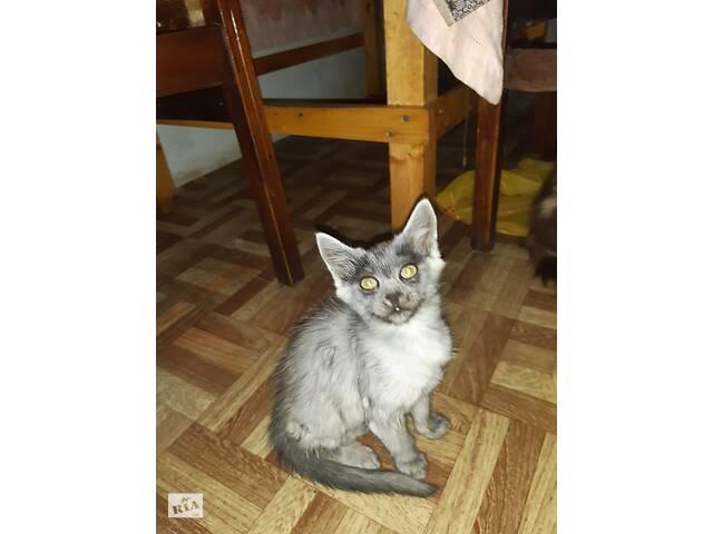 Отдам котиков в добрые руки- объявление о продаже  в Хмельницком