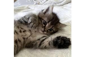 Віддам в хороші руки кошеня